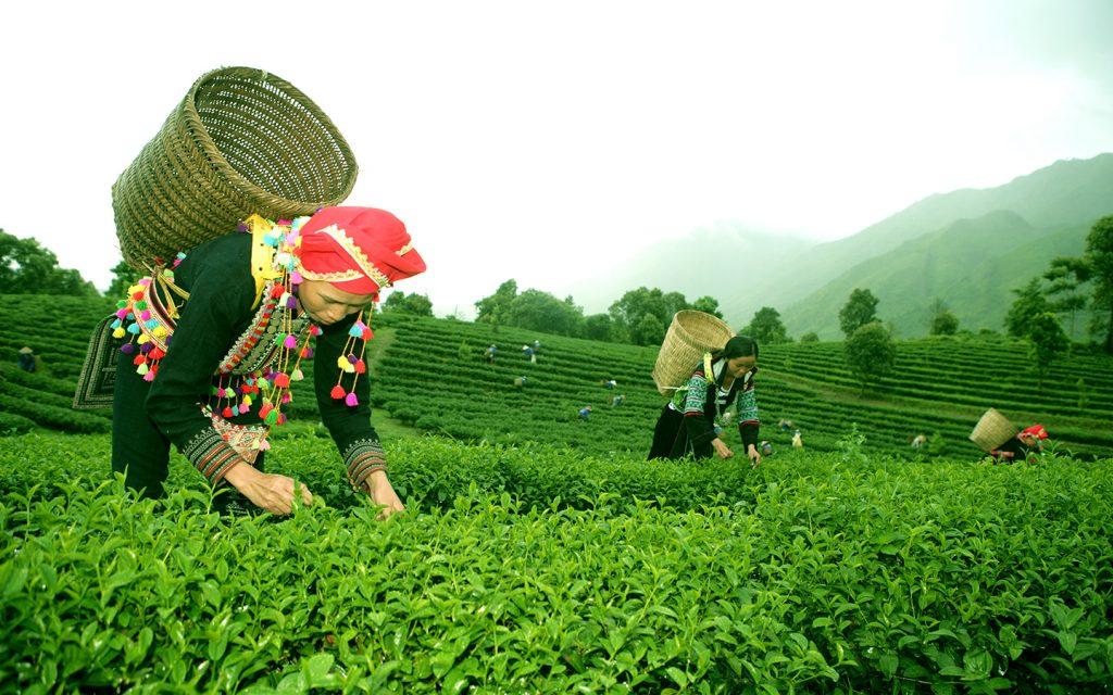 Van chuyen hang hoa Hai Phong di Lai Chau