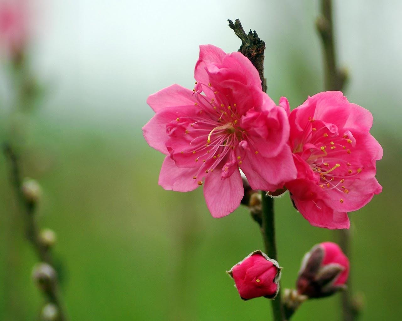 van chuyen hoa da da lat di thanh hoa chuyen nghiep