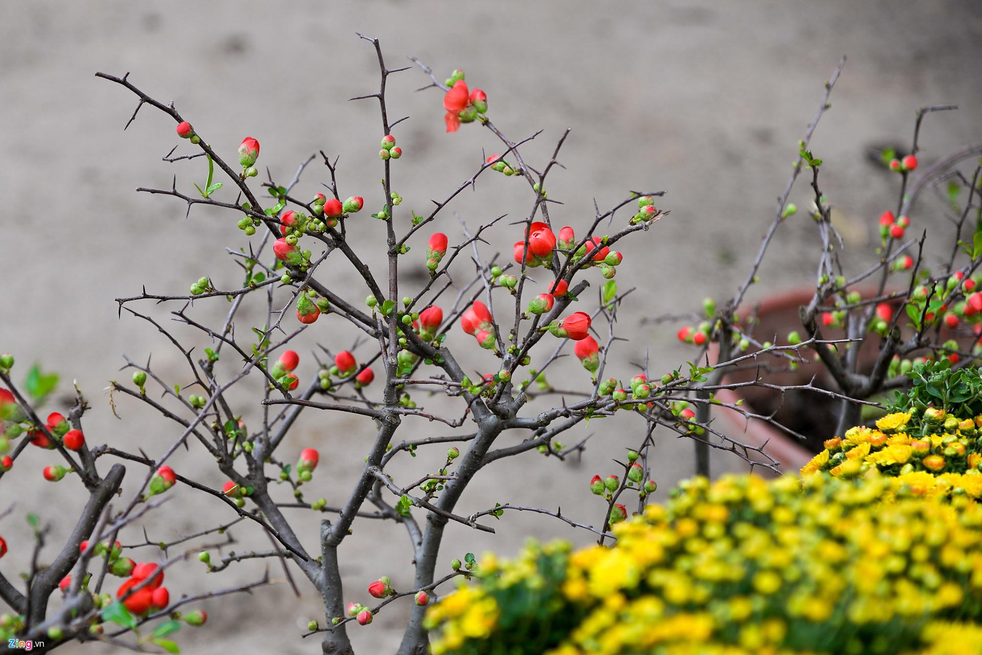 van chuyen hoa dao Da Lat di Yen Bai chuyen nghiep