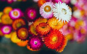 van chuyen hoa kho da lat di thai nguyen